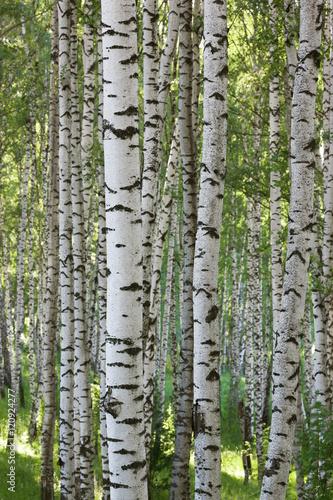 Deurstickers Berkbosje summer in birch forest