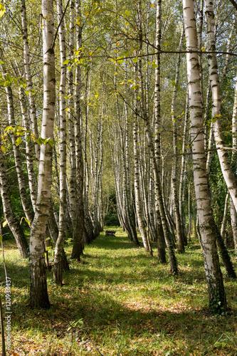 Leśna aleja - 120934437