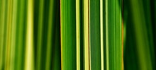 Close Up Of Green And Yellow Grass Blades