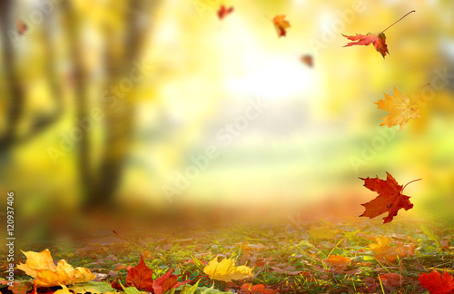 Foto op Aluminium Oranje Beautiful landscape with yellow trees,green grass and sun.