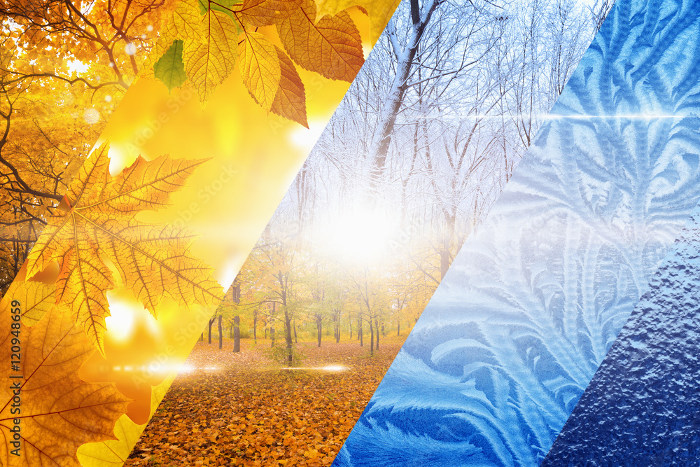 Fototapety, obrazy: Fall turns to winter. Vibrant colorful images of different time of year - fall and winter.