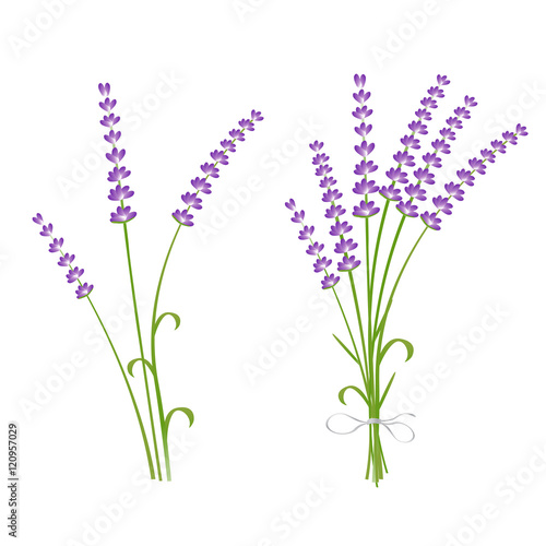 Photo  Fresh cut fragrant lavender plant flowers bunch and single 2 realistic icons set