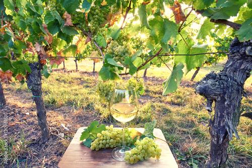 Fotobehang Zwavel geel frischer Wein im Weinglas in den Weinbergen