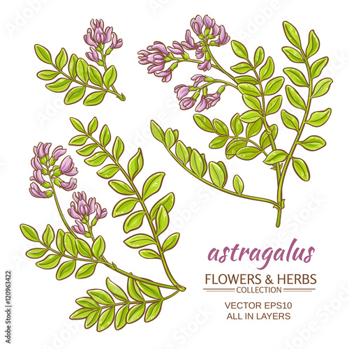 astragalus vector set Wallpaper Mural
