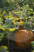 Zipper Spider Web In Pumpkin Patch