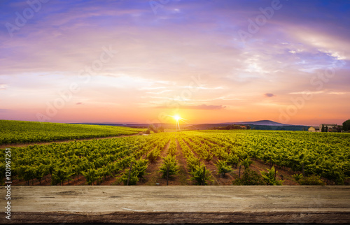 Foto op Aluminium Wijngaard Red wine with barrel on vineyard in green Tuscany, Italy