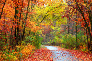 Beautiful alBeautiful alley in colorful autumn timeley in colorful autumn time