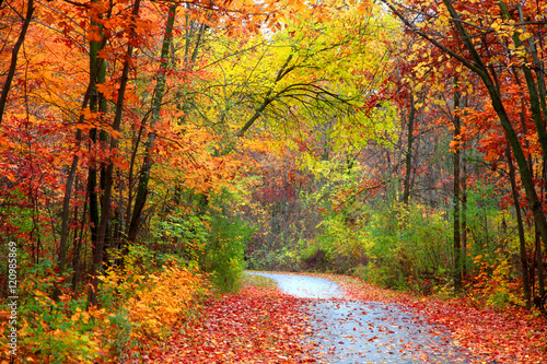 Poster Oranje eclat Beautiful alBeautiful alley in colorful autumn timeley in colorful autumn time