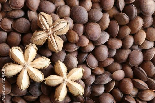 Foto auf AluDibond Kräuter Legumes of Sacha inchi or Inca peanut.