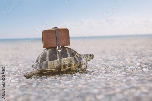 Foto op Aluminium Schildpad Turtle with suitcase.