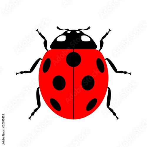 Fototapeta premium Mała ikona biedronki. Czerwony znak błędów lady, samodzielnie na białym tle. Projekt zwierząt dzikich zwierząt. Śliczna kolorowa biedronka. Chrząszcz kreskówka owad. Symbol natury, wiosna, lato. Ilustracji wektorowych