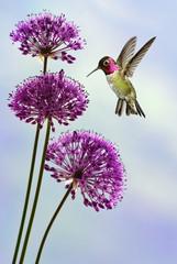 NaklejkaTiny Hummingbird in the Garden Vertical Image
