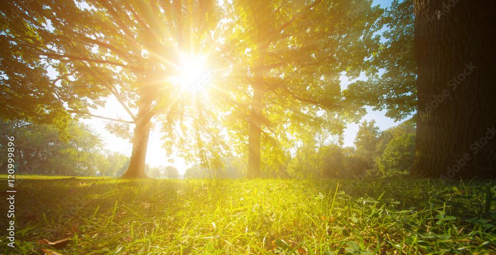 Fototapety, obrazy: sun rays through trees leaves