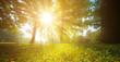 Leinwandbild Motiv sun rays through trees leaves