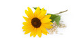 canvas print picture - Sonnenblume und Sonnenblumenkerne