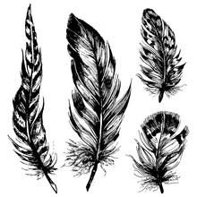 Hand Drawn Ink Feathers Set