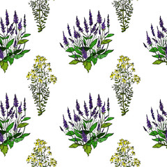 Fototapeta Seamless pattern St. John's wort and sage