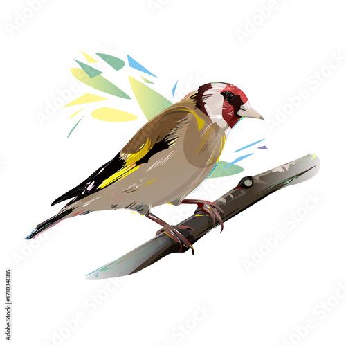 Cuadros en Lienzo Goldfinch Bird, Vector Illustration