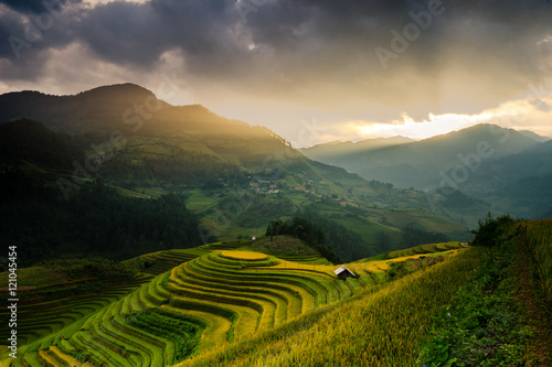 Garden Poster Rice fields Beautiful Rice Terraces in the evening, South East Asia