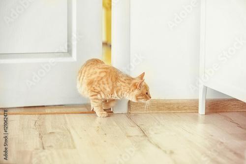 Fotografía  Curious cat entering room