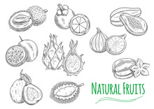 Exotic Tropical Fruits Isolated Sketch Icons