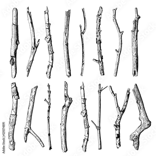 Fotografia Set of detailed and precise ink drawing of wood twigs, forest collection, natural tree branches, sticks, hand drawn driftwoods forest pickups bundle
