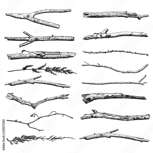 Set of Driftwood, ground floor hand drawn ink rustic design elements collection. Dry tree branches and wooden twigs. Vintage highly detailed classic ink drawings bundle art in engraved style. Vector. Wall mural