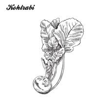 Kohlrabi. Harvesting. Sketch Made By Hand.