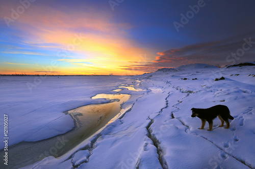 Fotografie, Tablou  lonely dog on the river