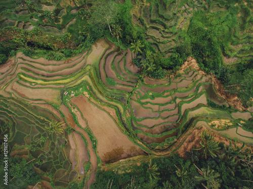 Fotobehang Rijstvelden Rice paddy terraced fields