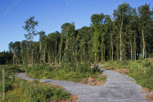 Fotografie, Obraz  Divergent Paths, Renville, Galway, Ireland