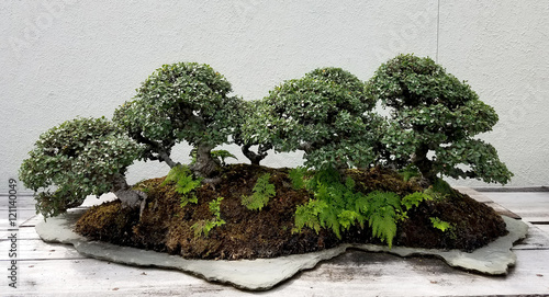 Poster Bonsai Bonsai and Penjing landscape with miniature forest of deciduous trees in a tray