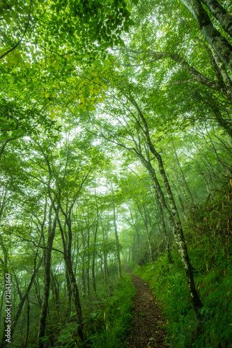 Wall Murals Forest 森の緑