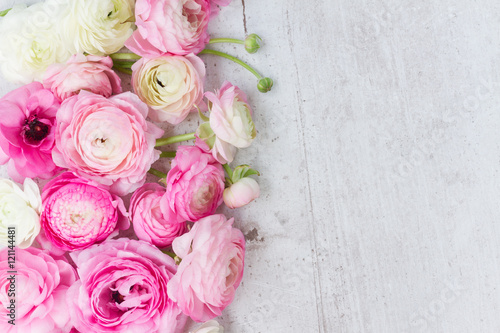 Garden Poster Floral Pink and white ranunculus flowers