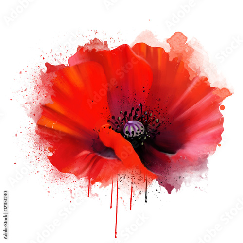 red poppy closeup, isolated on white background, with drips of paint as an artistic concept. Suitable print for garment and printing on notebooks, notebooks.