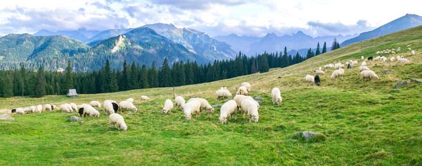 Panel Szklany Łąka Rusinowa Polana in Tatra Mountain, Poland