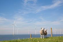 Offshore Windturbines In The IJsselmeer, The Netherlands With St