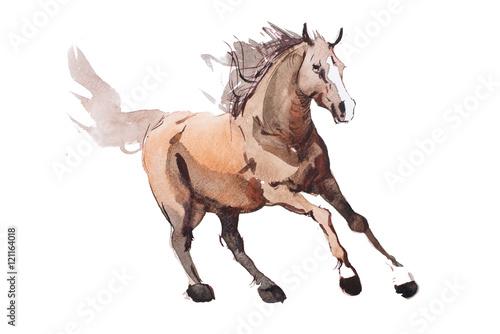 Photo  watercolor painting of galloping horse, free running mustang aquarelle