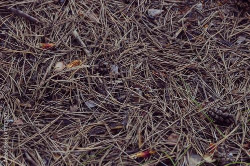 Staande foto Paardebloemen en water Fir cones on the forest floor