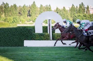 Race horses runs in the finish line.
