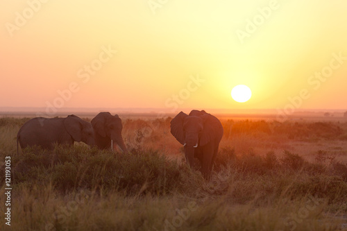 Fototapeta Typical african sunrise with elephants silhouettes in Masai Mara