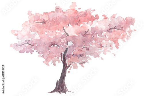 Fotografie, Obraz cherry trees watercolor illustration