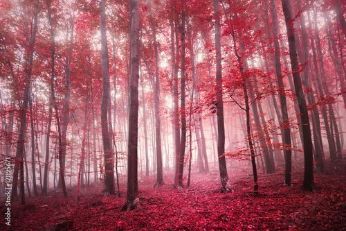 czerwone-drzewa