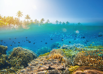 Coral reef in tropical sea on a background of island