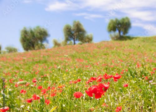 Foto op Plexiglas Blauwe hemel Field of wild poppies