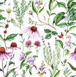 Ręcznie rysowane akwarela bezszwowe botaniczny wzór z różnych roślin. Powtarzające się naturalne tło z roślinami łąkowymi i medycznymi: echinacea, kawa, lawenda itp. - 121208438