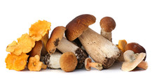 Wild Foraged Mushroom Selectio...