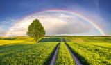 Fototapeta Tęcza - Tęcza nad wiosennym,zielonym polem