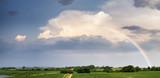 Fototapeta Tęcza - Tęcza nad polem na burzowym niebie