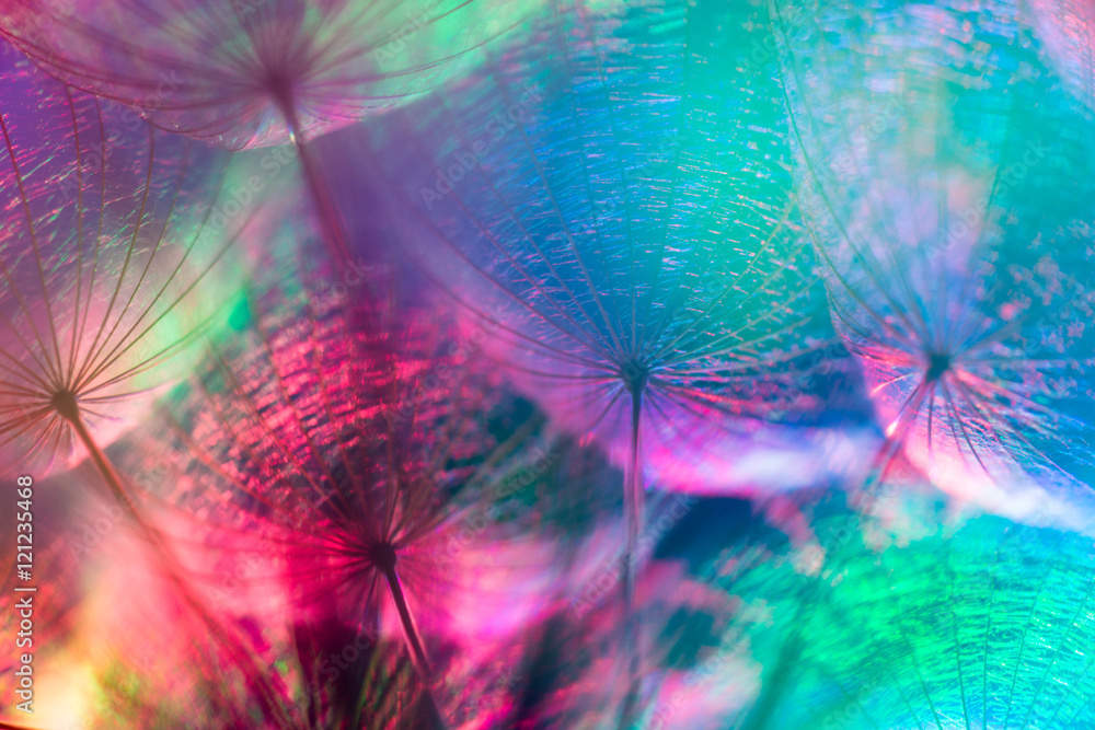Fototapety, obrazy: Colorful Pastel Background - vivid abstract dandelion flower